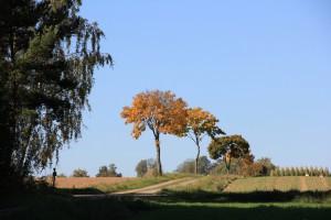 Herbstlaub bei Bayreuth in Oberfranken